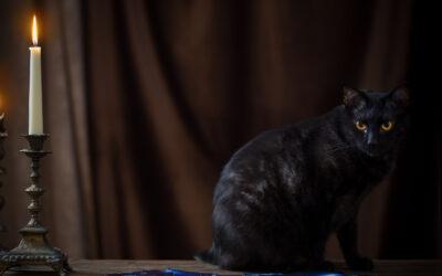 Tajemná magická kočka